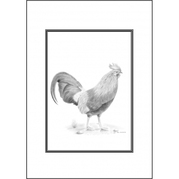 Cockerill greeting card - Code 022