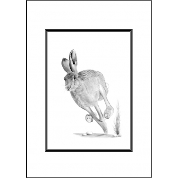 Hare general greeting card - Code 028