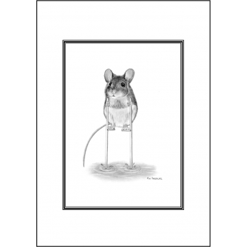Funny cute mouse general greeting card - Code 032