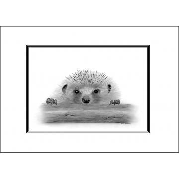 Hedgehog general greeting card - Code 060